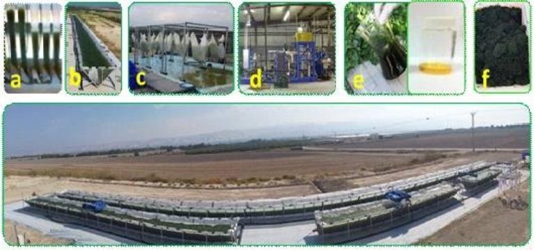 biomasa-algas